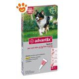 Bayer Advantix Spot-On per Cani da 10 a 25 kg B