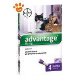 bayer-advantage-gatto-furetti-conigli-80-mg-taglia-grande