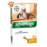 bayer-advantage-gatto-furetti-conigli-40-mg