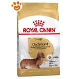 royal-canin-bassotto-dachshund-adult
